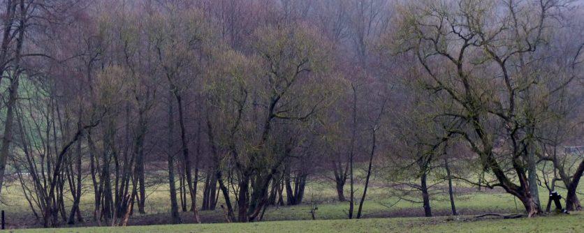 cropped-18_03_1-kopie.jpg