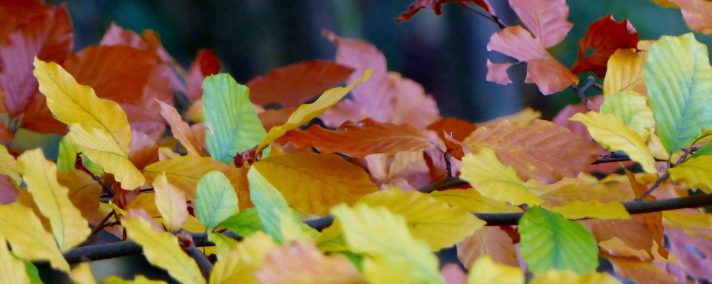 cropped-03_11_3.jpg